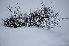 Winter is here! (irispuag) Tags: snow snowing white nature naturaleza bagà catalunya winter landscape bw blackandwhite shadow wild paysage air earthday eau