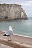 étretat (heavenuphere) Tags: étretat lehavre seinemaritime normandie normandy france europe landscape pebble beach chalk cliffs natural arch englishchannel english channel lamanche view sea water seagull gull bird 24105mm