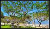 trees along the coastal (harrypwt) Tags: harrypwt indonesia canon nusadua bali coastal green trees canons95 s95 grass framed