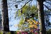 PrintempsStE_20180425_116 (Bourgeois Jean) Tags: france bretagne finistere automne canon canon5d jeanbourgeois arbre ciel canon5dmk2 pommes érable azalées