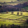 Tree Line Shadows (dalejckelly) Tags: canon canon5dmarkiv canon70300l trees scotland scottish scenery scenic rural lochlomond sunset goldenhour countryside trossachs outdoor landscape landscapephotography