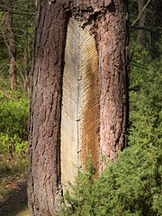 4 (silvy-s) Tags: nature borytucholskie trees m43 epl1 forest