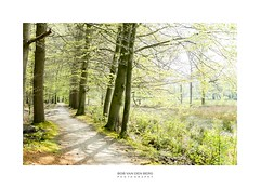 a forest in spring (Zino2009 (bob van den berg)) Tags: path spring color fresh trees light sunny hot 30 nature holland east tranquil rest peace ying yang peaceful
