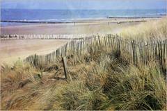 Dunes, mer du Nord et plage, Dombourg, Walcheren, Zeelande, Nederland (claude lina) Tags: claudelina nederland paysbas hollande zeeland zélande dombourg plage beach mer sea merdunord noordzee dunes poteaux
