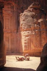 Petra (Ricardo Martinez Fotografia) Tags: 2017 ancient arqueologia arqueological camellos city d810 dromedarios jordan jordania light nikon old orange petra ricardomartinezcl travel wadimusa maangovernorate jo