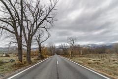 En la carretera... (Amparo Hervella) Tags: lagranjadesanildefonso segovia españa spain paisaje cielo nube puntodefuga árbol carretera montaña naturaleza color d7000 nikon nikond7000