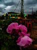 My Magic Bus (Steve Taylor (Photography)) Tags: magicbus smashpalace busbar lights graffiti streetart table pink colourful vivid tile newzealand nz southisland canterbury christchurch cbd city flower rose vehicle stool cloud stormy crane