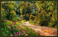 Primavera nel bosco - Maggio-2018 (agostinodascoli) Tags: art digitalart photoshop photopainting bosco impressionismo primavera boscocavallo cianciana sicilia agostinodascoli nature texture alberi colore fullcolor fiori creative