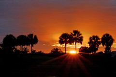Sunset View at Lake Miona, 2 (Jack_Taylor_Photography) Tags: pink lakemiona sunset trees thevillagesflorida florida colorfulsunset