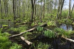 IMGP14152 (Łukasz Z.) Tags: starezaucze lubelskie rzeczpospolitapolska poleskiparknarodowy nationalpark sigma1750mmf28exdchsm pentaxk3