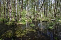 IMGP14149 (Łukasz Z.) Tags: starezaucze lubelskie rzeczpospolitapolska poleskiparknarodowy nationalpark sigma1750mmf28exdchsm pentaxk3