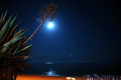 Beach at night (pmsmgomes) Tags: longexposure sea cactus beach portugal night sand nikon d70s algarve nikkor 1870mm pmsmgomes armaodepera nikonstunninggallery