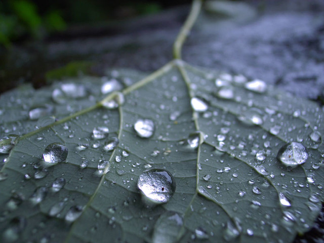 雨滴(raindrops)