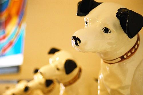Victor dog_ ビクター犬