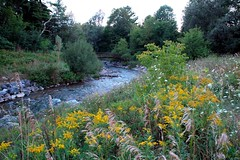 bear creek (snapstill studio) Tags: bridge flowers creek river countryside weeds stream footbridge michigan blossoms goldenrod august 2006 fallfoliage bloom upnorth ragweed bearcreek petoskey northernmichigan bearriver martinmcreynolds