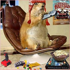 COUCH POTATO (Terry_Lea) Tags: photoshop dallas interestingness squirrel squirrels texas aww prairiedog prairiedogs sweettooth terrylea tbas terrorlea stillcancuininess clicktagworldicon