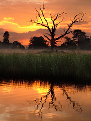 Saturday Sunrise (Kevin Day) Tags: uk sky orange lake reflection tree sunrise dawn deadtree slough berkshire langleypark