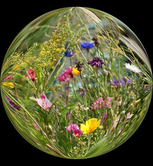 In their own little world... (lawatha) Tags: world flowers summer flower art nature ball circle interestingness globe manipulation artsy round bubble paintshoppro manipulate abigfave