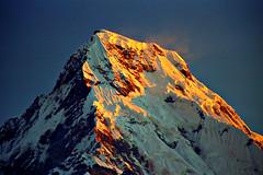 Golden Peak (acastellano) Tags: nepal mountain snow film topf25 topv111 topv2222 sunrise trekking canon topf50 topv555 topv333 topf75 bravo topv1111 topv999 peak explore summit topv777 agfa circuit topf100 annapurna himalayas poonhill elevation70007500m mountainshimalaya annapurnasouth elaniie interestingness174 ultra50 mywinners summitannapurnasouth altitude7219m theunforgettablepictures duelwinner lplookup gi1