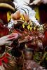 Papua New Guinea - Hulis (Eric Lafforgue) Tags: ocean new ireland sea shells coral island drums bay guinea highlands pacific britain central shell makeup tribal east papou tribes png » tribe papuanewguinea papua ethnic eastern hagen kina nouvelle indigenous enga milne coquillages chimbu tribu oceania « madang guinée coquillage manus bougainville pidgin tribus sepik oceanie papoua kodoka ethnique papuaneuguinea lafforgue papuanuovaguinea パプアニューギニア morobe sandaun ericlafforgue papouasie papouasienouvelleguinée mthagen mounthagen nigini papouasienouvelleguinee lafforguemaccom melanesian mytripsmypics pinding papuaniugini tambarans papúanueva ©ericlafforgue papoeanieuwguinea ΠαπούαΝέαΓουινέα 巴布亞紐幾內亞巴布亚纽几内亚 巴布亞新幾內亞巴布亚新几内亚 papuásianovaguiné ПапуаНоваяГвинея papúanuevaguine papuanyaguinea