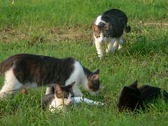 Cats! 9/2/06 (robert_rvnwd) Tags: gerbil mini sally wendy