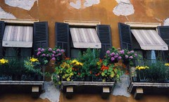 Venetian Windows (*labaronesa*) Tags: above flowers venice windows italy wall peeling italia view shutters below ochre venezia crusty awnings blooming windowboxes labaronesa