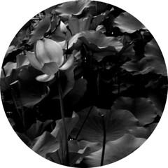 Lotus (horses and tigers) Tags: china gardens botanical tag1 lotus beijing kiss2 kiss3 kiss1 kiss4 kiss5