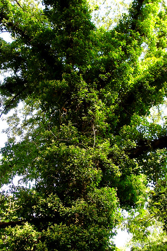 Vine Tree | Flickr - Photo Sharing!