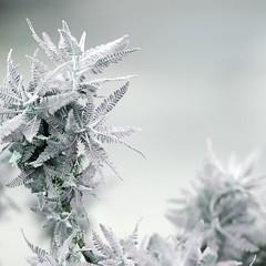 mint (`yoshi) Tags: flower d50 11 breathe yoshi 85mmf14d bibble notfrozen freelight