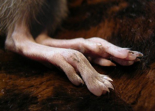 Horrible Claws !