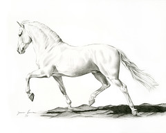 Fargo (jeanner) Tags: portrait horse art pencil drawing 2006 graphite stallion equine andalusian