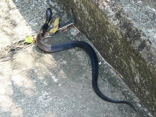 Hong Kong (香港) - Lantau Island (大嶼山) - Mui Wo (梅窩) - Cobra ...