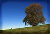 the giving tree (richietown) Tags: autumn tree topf25 topv111 boston topv2222 interestingness topf50 topv555 topv333 massachusetts topv1111 hill stock topv999 oldman explore getty topv777 brookline 28135mm slope 30d bostonist canon30d larsandersonpark universalhub scoreme44 bostonphotos abigfave bostonphotographer richietown impressedbeauty bostonphotography bostonphoto bostonphotographs