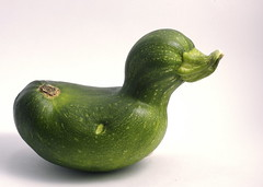 Zucchini Duck (by Alex Gee)