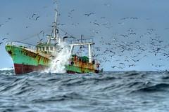 Free meal (pedro vidigal) Tags: portugal birds boat fishing rust lisboa lisbon gimp free wave spray meal linux vilamoura seagul breaking ufraw pedrovidigal abigfave specobject kkfav p1f1
