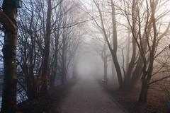 Fog in the morning (rek photography) Tags: nature fog d50 germany landscape nebel flu natur owl landschaft morgens dunst gtersloh