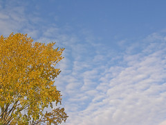 Autumn is in the air (digicla) Tags: sky tree fall yellow clouds wolken boom bleu lucht leafes geel bladeren herft