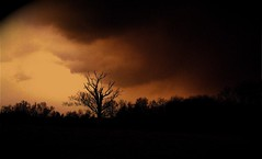 Dark Winter Sky (mightyquinninwky) Tags: trees abstract 30 sepia clouds landscape march countryside mac topv333 perfect 500v20f bluegrass 10 kentucky lovely1 explore 25 iphoto 500 20 treeline quicktime stormclouds earlyspring latewinter fujifilmfinepixs9000 123faves centralkentucky flickrgold ci33 flickrgoldaward exploreformyspacestation bestofformyspacestation