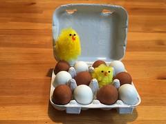 Nougat Landeier helfen gegen schlechtes Wetter (Sockenhummel) Tags: ei eier eggs landeier nougat eierkarton küken osterküken sweets schokolade süsigkeit ostern easter butterlindner