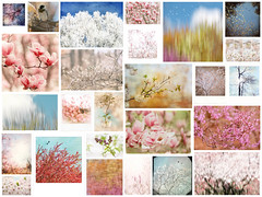 March 2018 Mosaic (jeanne.marie.) Tags: pastels blue pink collage floweringtrees mosaic nature spring march 2018
