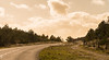 A bend in the road. (Alex-de-Haas) Tags: 70200mm d500 dutch holland nederland nederlands netherlands nikkor nikon noordholland aandekust beautiful beauty kust kustgebied landscape landschap mooi nature natuur pretty sunny winter zonnig schoorl nl