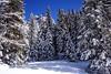 DOLOMITI. PALAFAVERA. (FRANCO600D) Tags: dolomiti montepelmo bosco pineta alberi pini abeti snow inverno winter bl valzoldana agordino veneto pecoldizoldo unesco palafavera canon eos600d franco600d 1820 86 55