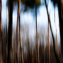 In The Pines 003 (noahbw) Tags: d5000 icm nikon abstract blur forest hellernaturecenter intentionalcameramovement landscape motion movement noahbw treetrunk trees winter woods
