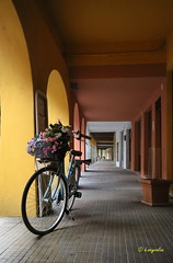 Vélo romantique... (hmeyvalian) Tags: fontanellato parma italia italie italy biciclettadecorata