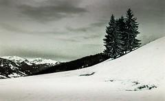 Combloux lomography turquoise 02 2018011 (Patrick.Raymond (5M views)) Tags: alpes montagne haute savoie combloux la cry neigne froid gel hiver nikon argentique lomography turquoise
