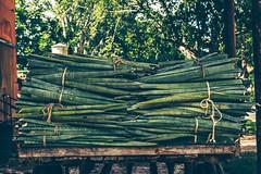 La cosecha del henequén (julien.ginefri) Tags: mexico méxico america latinamerica yucatán yucatan hacienda