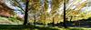 20180420-09-Cascade Gardens autumn trees_pano (Roger T Wong) Tags: 2018 australia cascadegardens hobart ptgui rogertwong sel1635z sony1635 sonya7ii sonyalpha7ii sonyfe1635mmf4zaosscarlzeissvariotessart sonyilce7m2 tasmania autumn pano panorama trees
