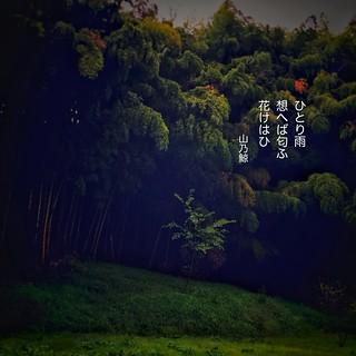 ひとり雨 想へば匂ふ 花けはひ[山乃鯨] #haiku #photohaiku #poetry #spring #micropoetry #春 #フォト俳句 #Japanese #写真俳句 #俳句 #snapseed #phonto #jhaiku #mpy #vss #3lines #poem #shortpoem #verse #actuallyautistic #autisticpoetry #失恋 #恋歌 #恋俳句 #love #brokenheart