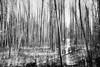 spring forest (sami kuosmanen) Tags: kuusankoski kouvola luonto light landscape long europe exposure expression emotion eerie photography puu pitkä valo valotus vesi bokeh black winter white taivas tree tumma trees intentionalcameramovement icm finland forest metsä maisema polku path