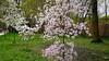 06-DSC05524 (Nowiny z Monachium) Tags: münchen ogródróż rosengarten bäumen giftpflanzen isarauen sträu